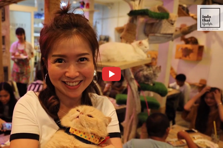 Cafe full of Cats? – Unique Place in Bangkok