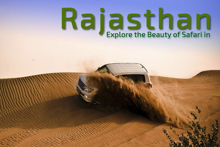 Explore the Beauty of Safari in Rajasthan