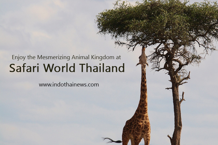 Enjoy the Mesmerizing Animal Kingdom at  Safari World Thailand