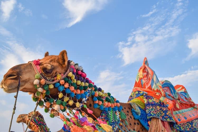 Gujarat's Most Extravagant Desert Fest: The Rann Utsav