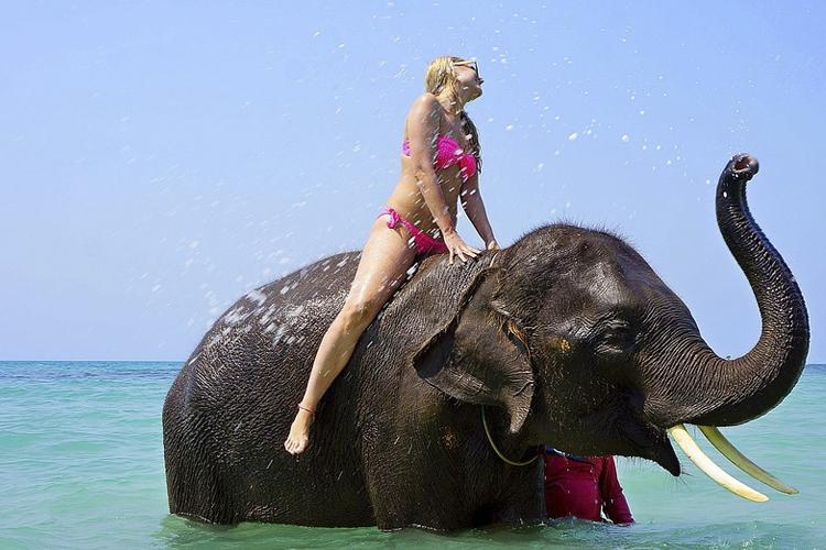Cruelty Behind Tourism