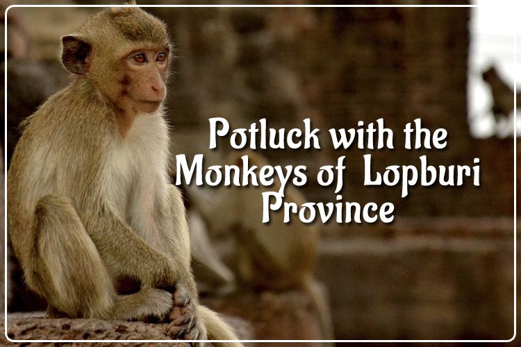 Potluck with the Monkeys of  Lopburi Province