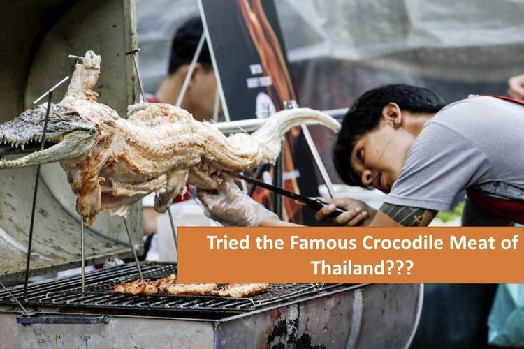 My Crocodile Meal in Thailand