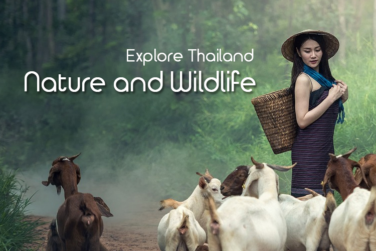 Explore Thailand's Breath – Taking Nature and Wildlife