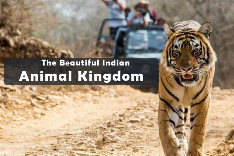 The Beautiful Indian Animal Kingdom