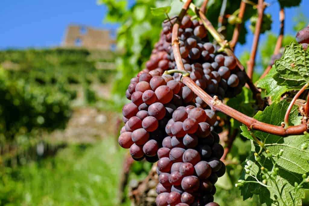 red wine health benefits: red wine is good for skin