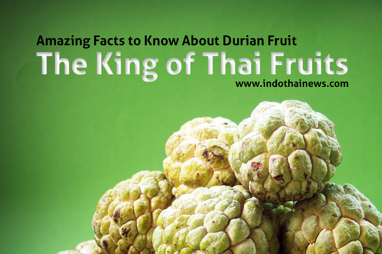 Amazing Facts to Know About Durian Fruit – The King of Thai Fruits