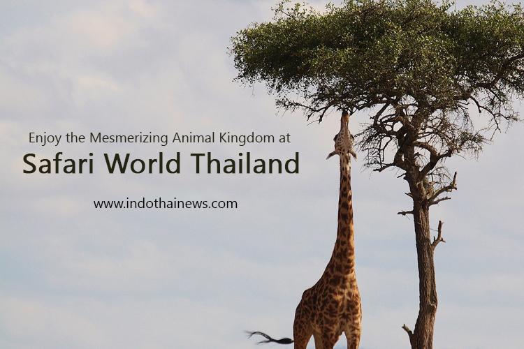 Enjoy the Mesmerizing Animal Kingdom at  Safari World Thailand